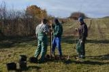 Fák ültetése, pótlása (2015. 11. 13.)